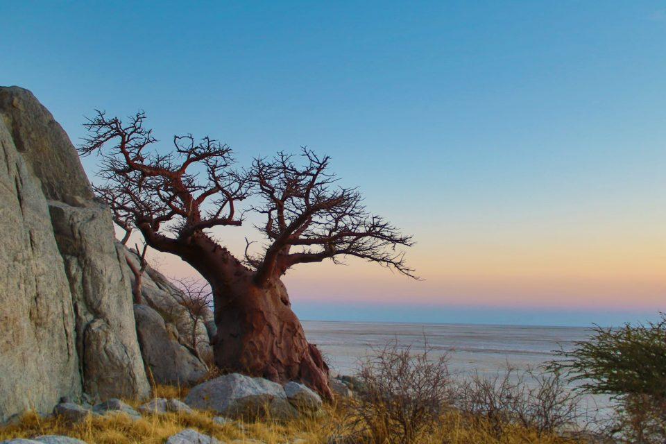 Botswana - Makgadigkadi Pans