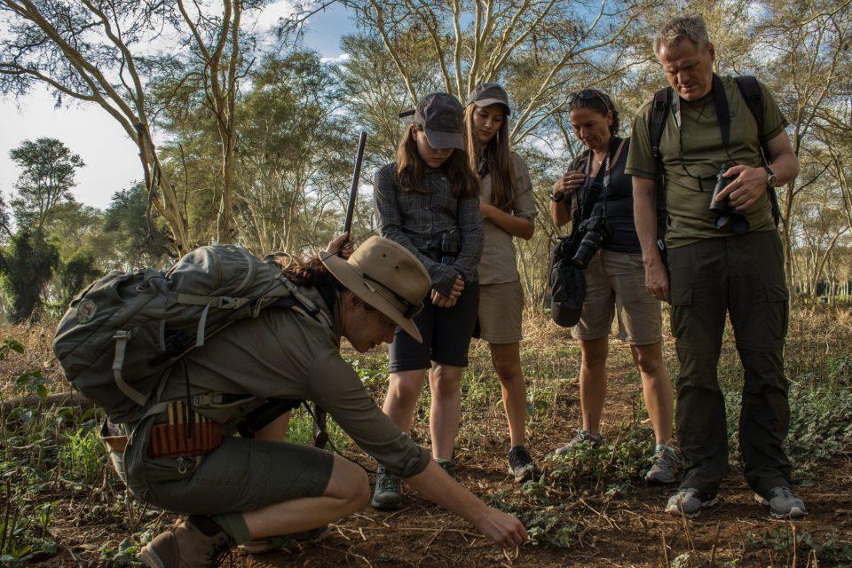 Kruger surrounds1