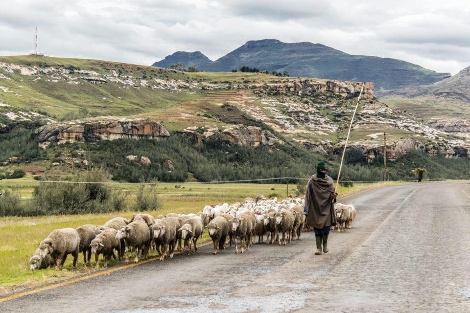 MS - Lesotho 2