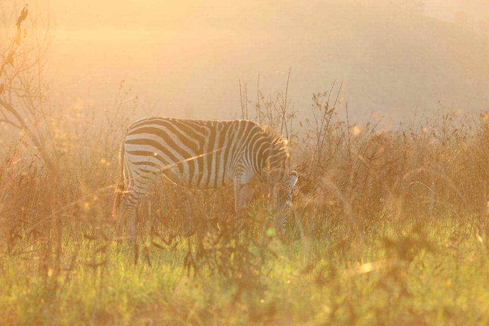 MS Swaziland 3