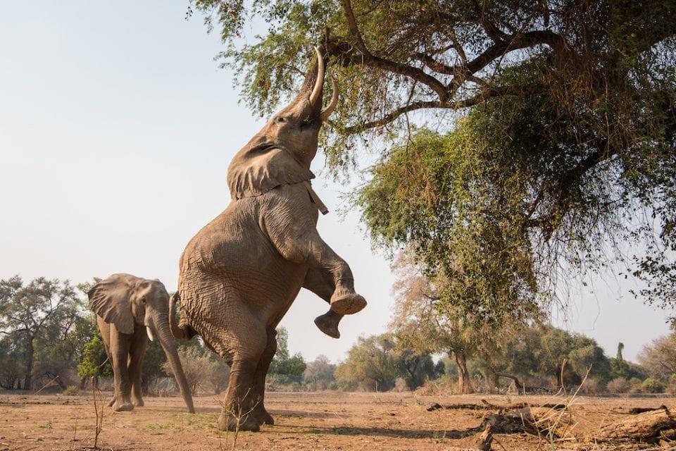 Matakataka Safaris Zimbabwe Mana Pools