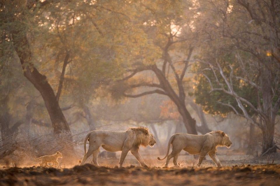 chikwenya_wildlife_hi_res_-_kyle_and_ruth_317_of_334